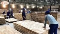 The US-China trade war has a strong impact on the Vietnamese wood industry Nam